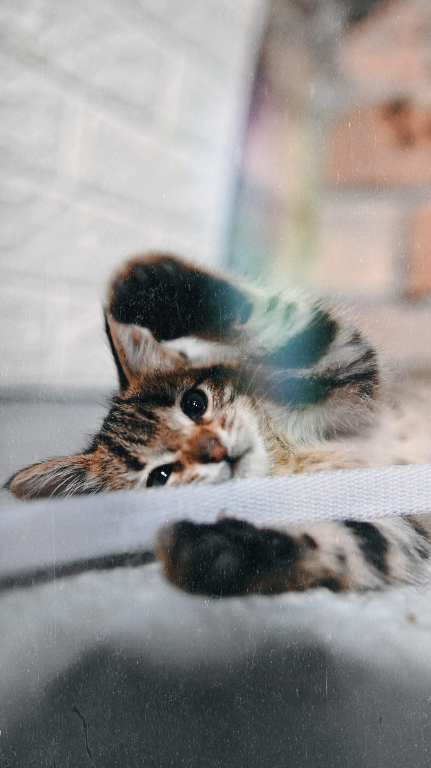 Mi Gato Muerde Todo Lo Que Está A Su Alcance